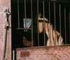 iridium: (fence)