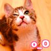 ayanamisama: (o_O)