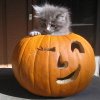 thexphial: (Animals - Vilya Halloween)