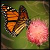 aimeelicious: (butterfly_byeyesthatslay)