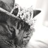 aimeelicious: (royalkitty_bybisty)