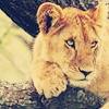 aimeelicious: (tiger_bypokemasterson)
