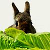 aimeelicious: (bunny_byrefuted)