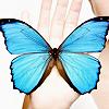aimeelicious: (butterflyblue_byrefuted)