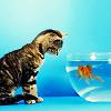 aimeelicious: (kittengoldfish_byrefuted)