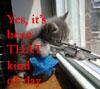 callicrates: (homicidal kitten)