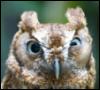 myschyf: (Furious Owl)