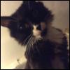 myschyf: (Louie)