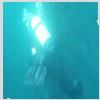 tiggymalvern: (diver)