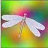 dianadragonfly: (Default)