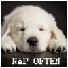bookglowwurm: (nap often- dog)