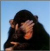 bookglowwurm: (embarrassed monkey)