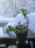 vdansk: (plant)
