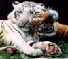 katydaqueen: (tiger)