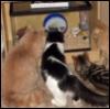 jaunthie: (CatTV)