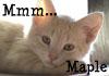 plunkybug: (Mmm...maple!)