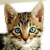 bodldops: (cute kitten)
