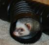 weaselmom: (Pensive Fiona)