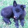northernwalker: (Puppy)