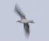 agent_dani: (Seagull)