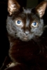 gwen_ives05: One of my previous cats (Default)