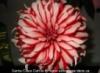 ladyapple27: ()