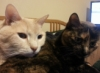 tree_haus: My Cats, Jack and Jenni (Cats)