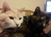 tree_haus: My Cats, Jack and Jenni (Cats) (Default)