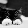 sasverse: (.cats - hiding behind my paws)