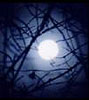 miss_kae_oz: (Moonlight)
