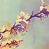 vorona_n: (cherry)