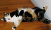 adoptedwriter: (Cheetah silly)