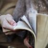 rabidmunkee: (book flip)