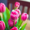 princessofburundi: (tulips)