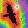 misterx: (raven)