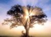 rio_luna626: (oak tree)
