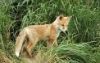 rio_luna626: (summer fox kit)