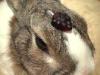 oh_peccadillo: (gummy bunny)