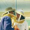 clothesfluke: ([Bees])