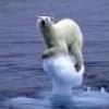 andygates: (polarbear)