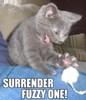 twistdbear: (Surrender fuzzy one!)