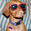 thiscrazydoglady: (riley with sunglasses.)