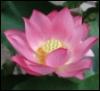 roisindubh211: (Lotus)