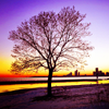 stargazer60: (tree at sunrise)