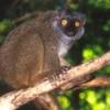 scott_sanford: (Sanford, lemur)