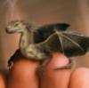 deza: (Finger Dragon)