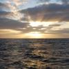 scherryzade: (sunset)