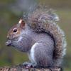 xp_squirrel: (shock)