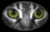 joreth: (being wise, statement, Kitty Eyes)