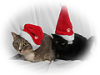 joreth: (Xmas Kitties)